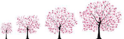 K Japonsku patří růžový strom a futony